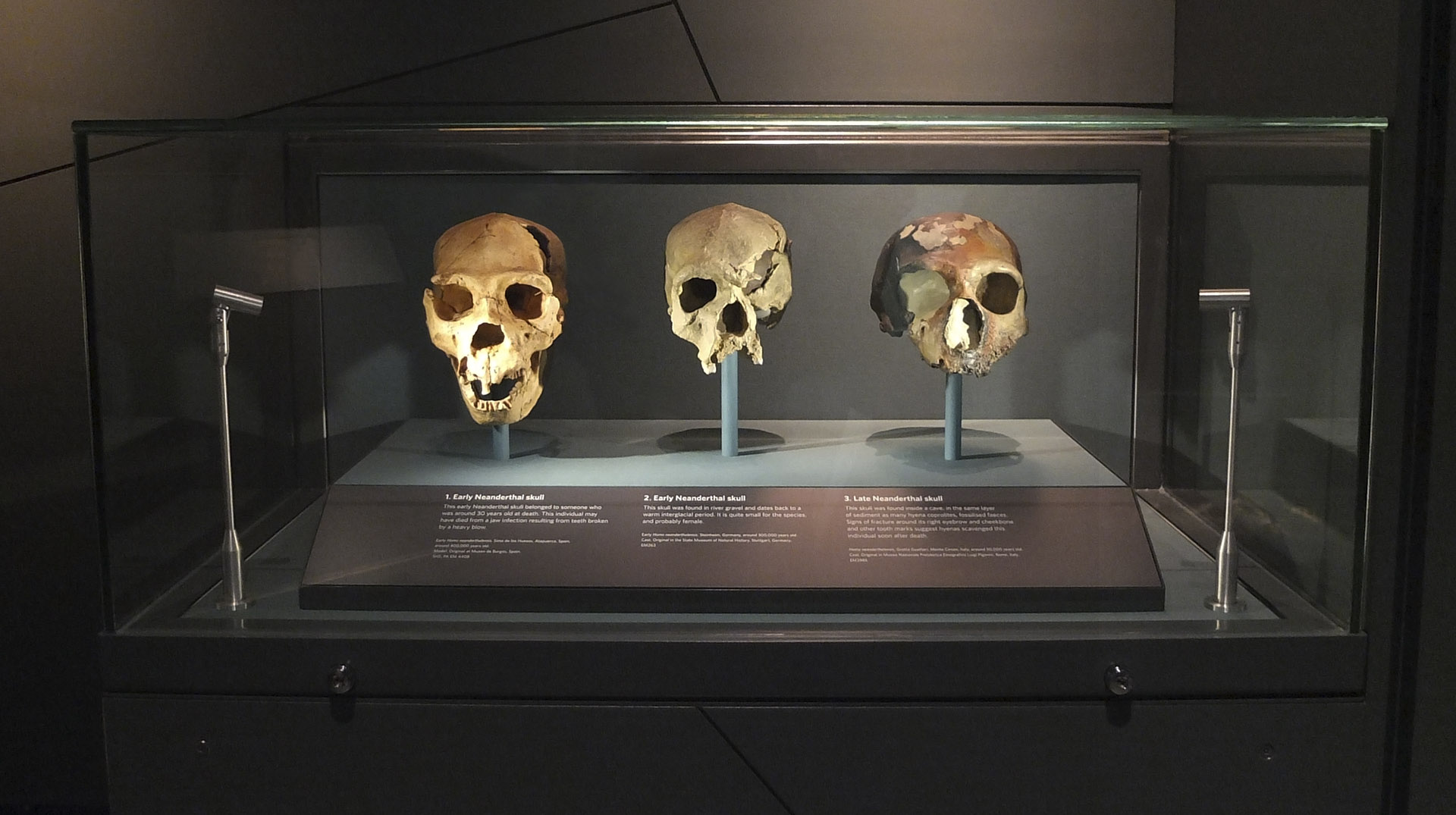 a history of the discoveries about the origins of humans Founded in 1981 by donald johanson and moved to asu in 1997, iho blends high-profile field and analytical research on human origins with public outreach programs.