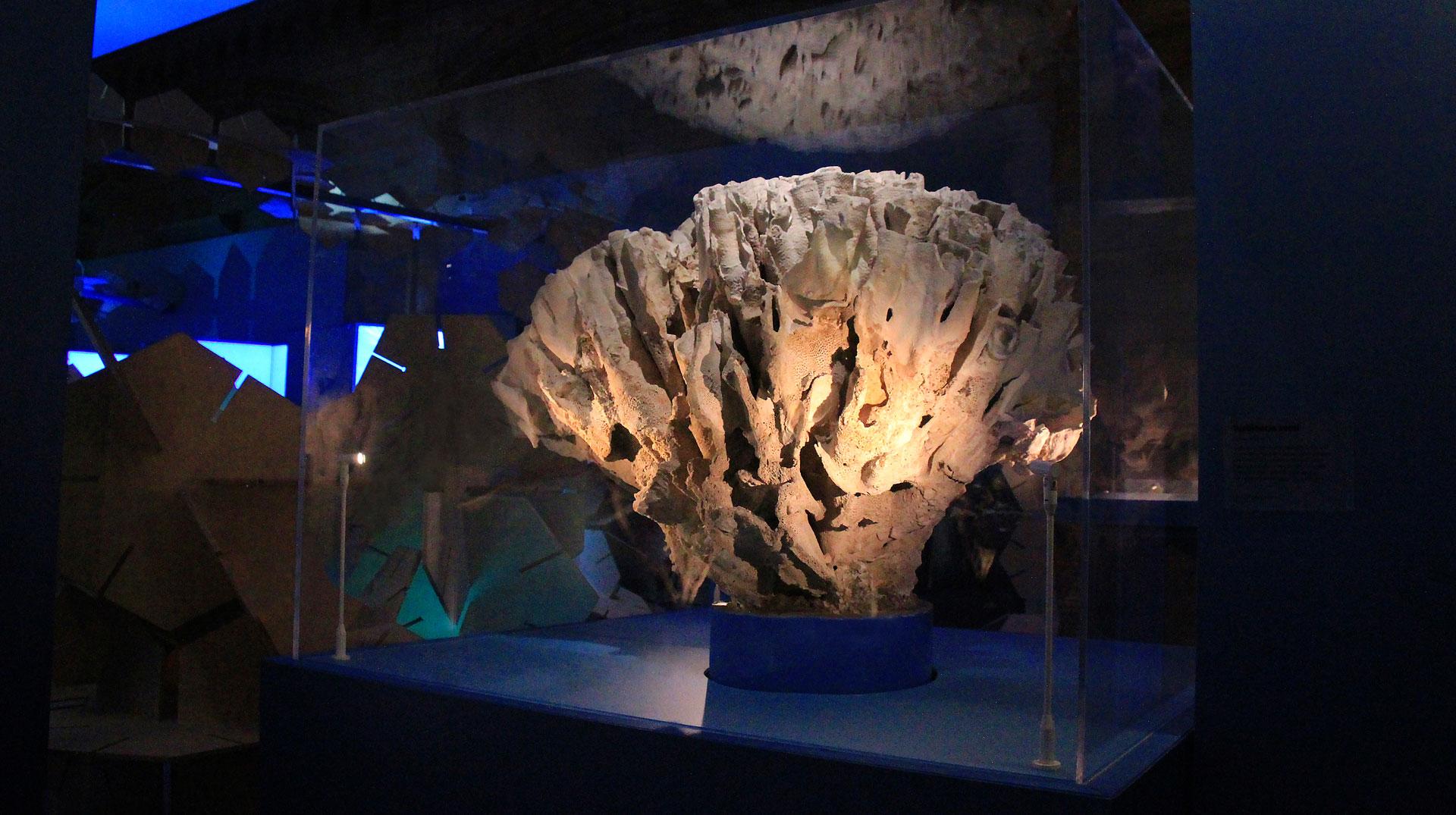 coral-reef-02.jpg